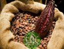 Thành phần dinh dưỡng của bột ca cao